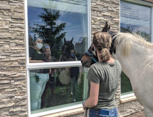 Therapy Horses Visit Seniors During COVID-19